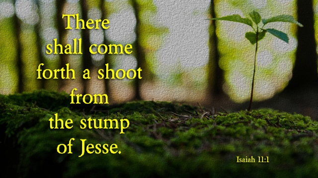 Isaiah 11_1